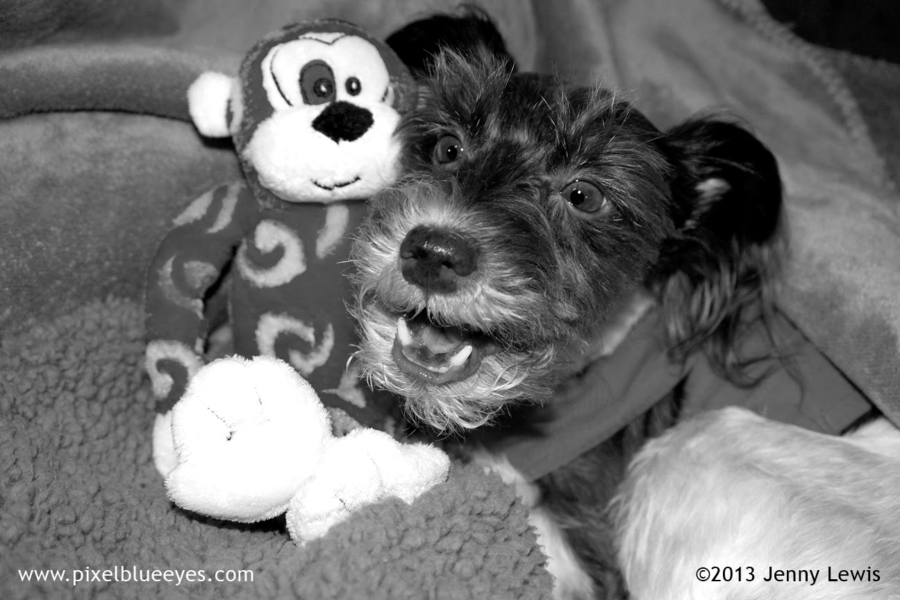 Black & White Photo of Pixel laughing with Randolf the Red Eyed Monkey Toy