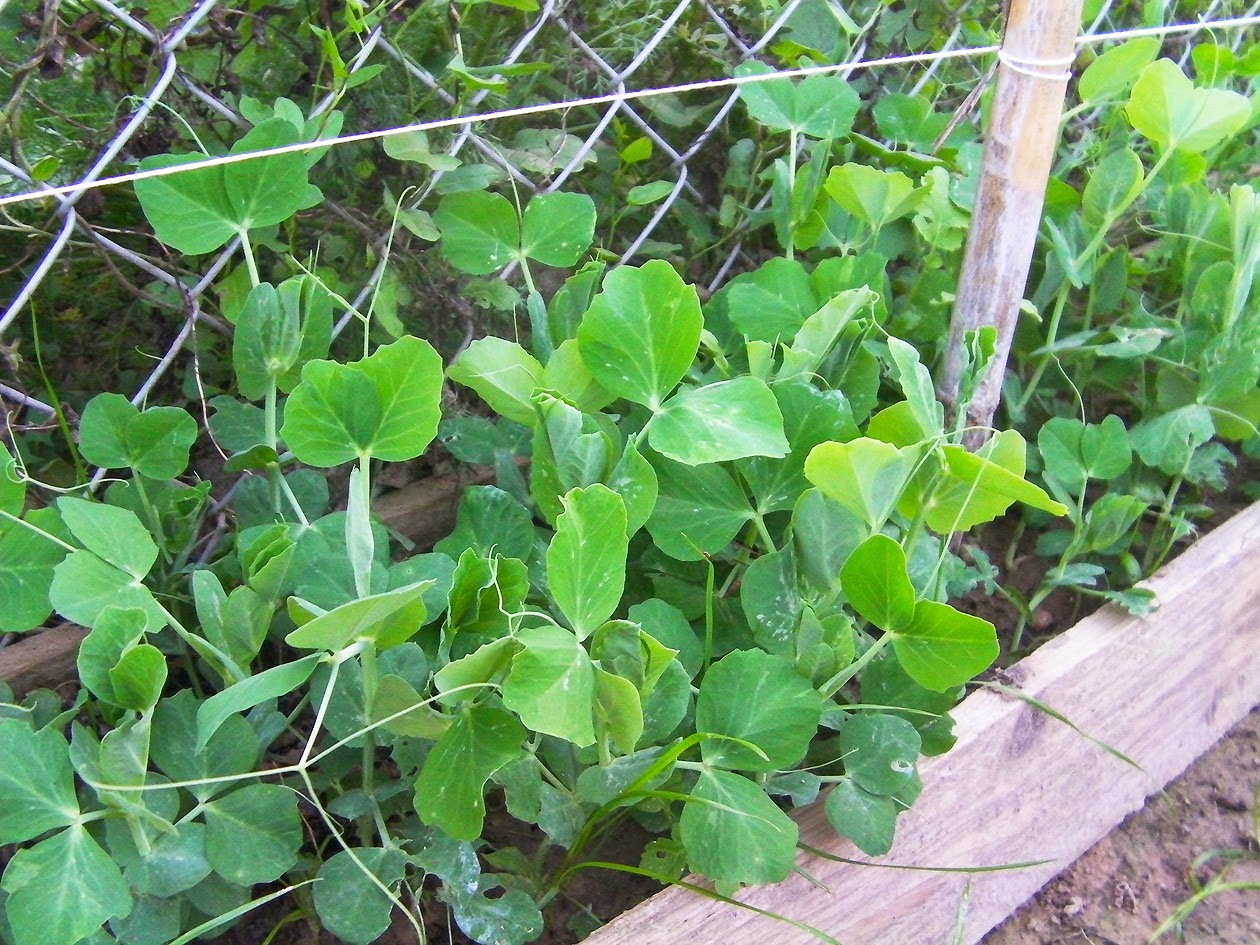 Plantas que soportan el frio y calor cuidar de tus - Plantas de frio y calor ...