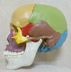 欝や頭痛自律神経、顎関節でお悩みの方へ頭蓋骨調整のおすすめ。