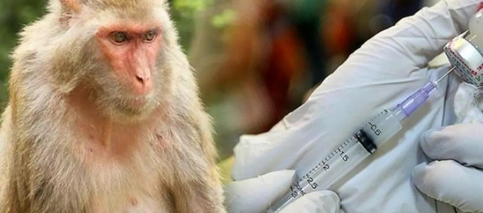 Científicos hallaron nueva vacuna contra VIH efectiva en monos