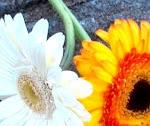 corrente de flores