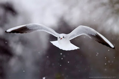 Beautiful Great Bird Photography