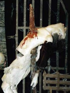 1.bp.blogspot.com/-XitlJDoRMLE/UAgudiJdbMI/AAAAAAAAARY/JEjY6UxCa6s/s1600/Impalement.jpg