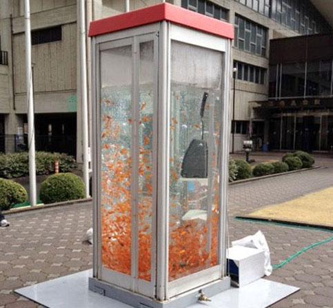 صور اليابان حولت اكشاك الهواتف العامة لاحواض اسماك زينة