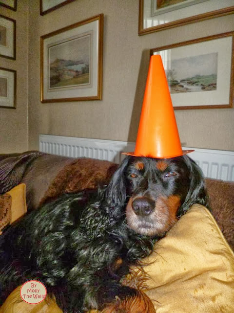 Molly The Wally Is No Dunce!