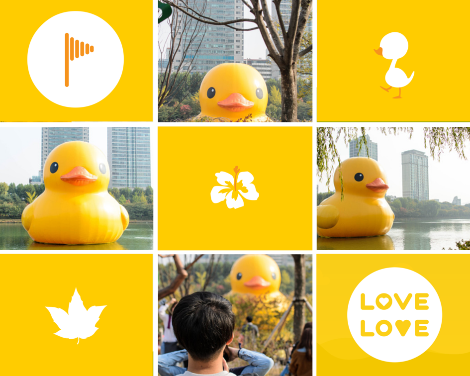 Seoul Rubber Duck Project