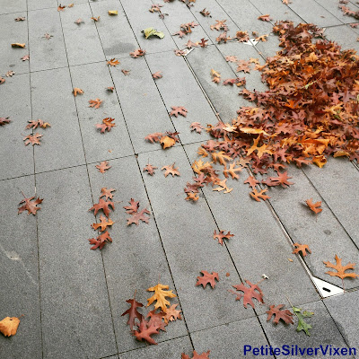 Fallen Autumn Leave on concrete | Petite Silver Vixen