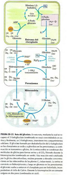 ciclo esteroides sin efectos secundarios