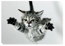 kucing-jatuh