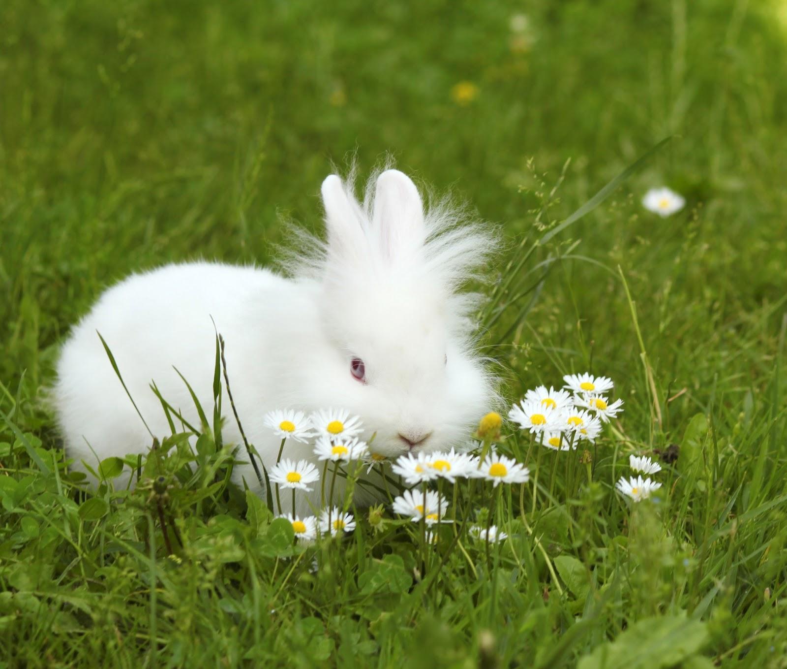 mascotas-fotos-de-animales-conejito-muy-lindo-o-rabbit-very-cute.jpg