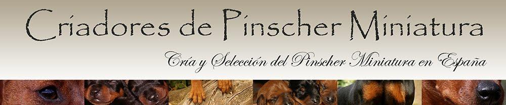 Criadores de Pinscher Miniatura