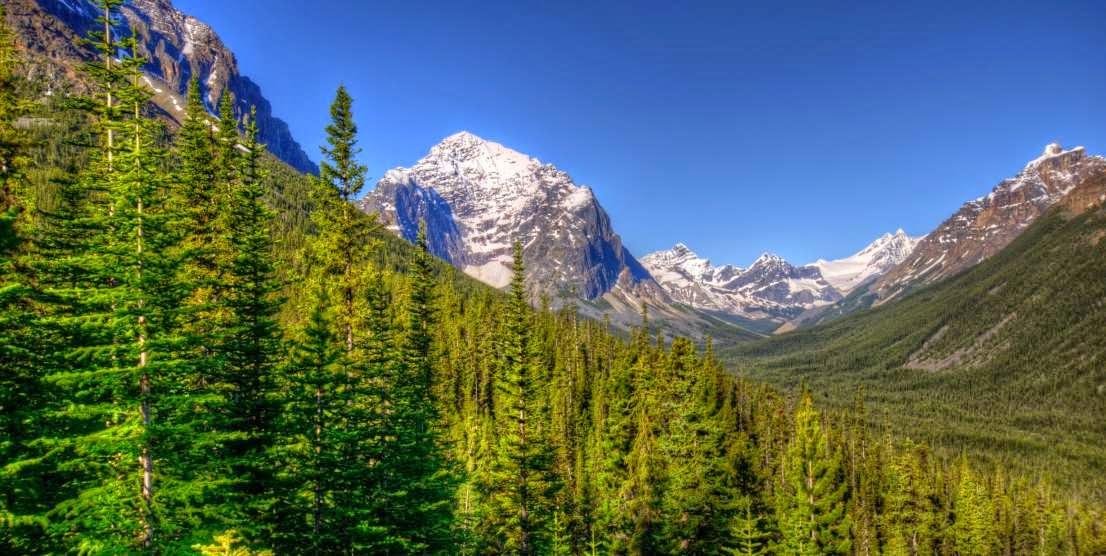 Bosques de montaña y biologia de los ecosistemas