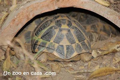 Refugio tortuga mediterránea