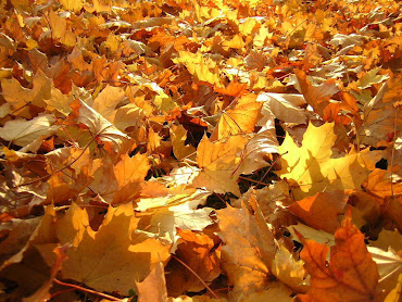 #3 Fall Leaves Wallpaper