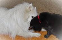 Som hund och katt...