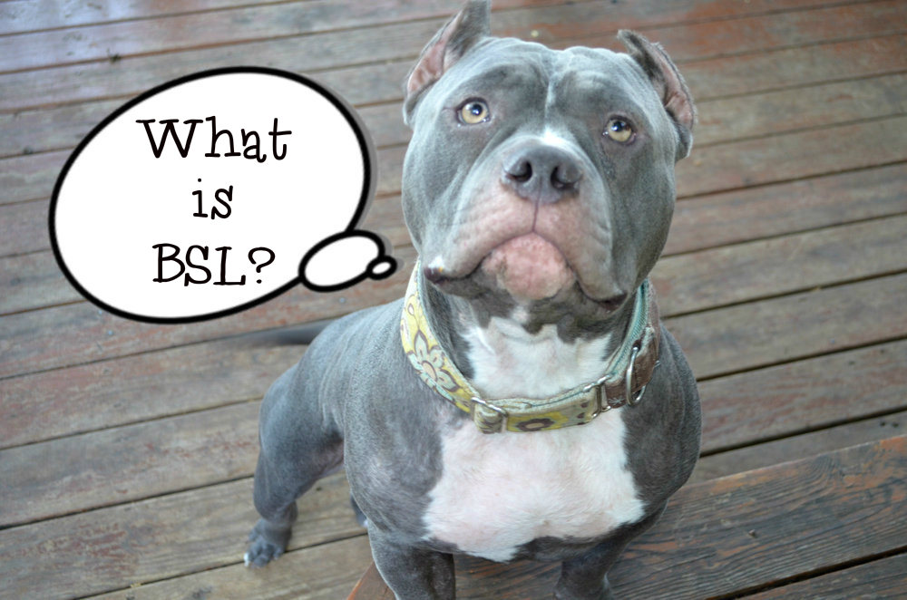 breed specific legislation Breed specific legislation unfairly penalises well-behaved dogs based simply on a dog's appearance this does little to protect the public from irresponsible dog owners.