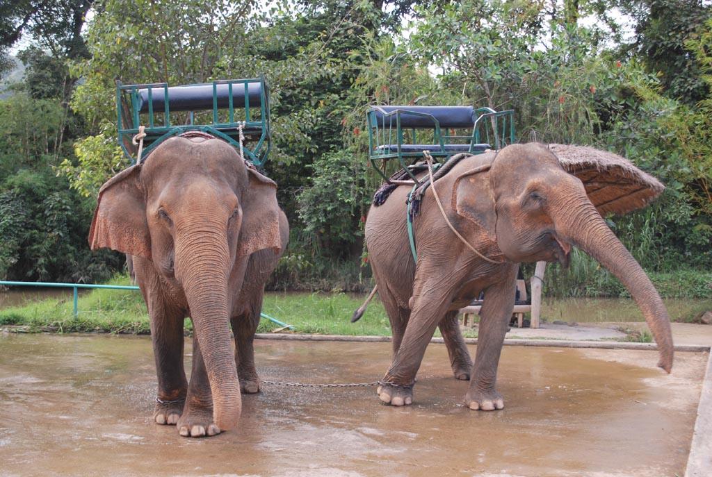 Hai chú voi trong khu du lịch Thác Prenn, Đà Lạt