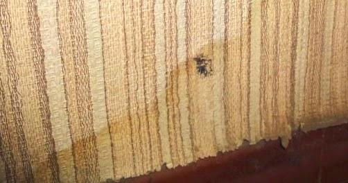 constater le d g t des eaux d clarer le sinistre devis degat des eaux paris. Black Bedroom Furniture Sets. Home Design Ideas