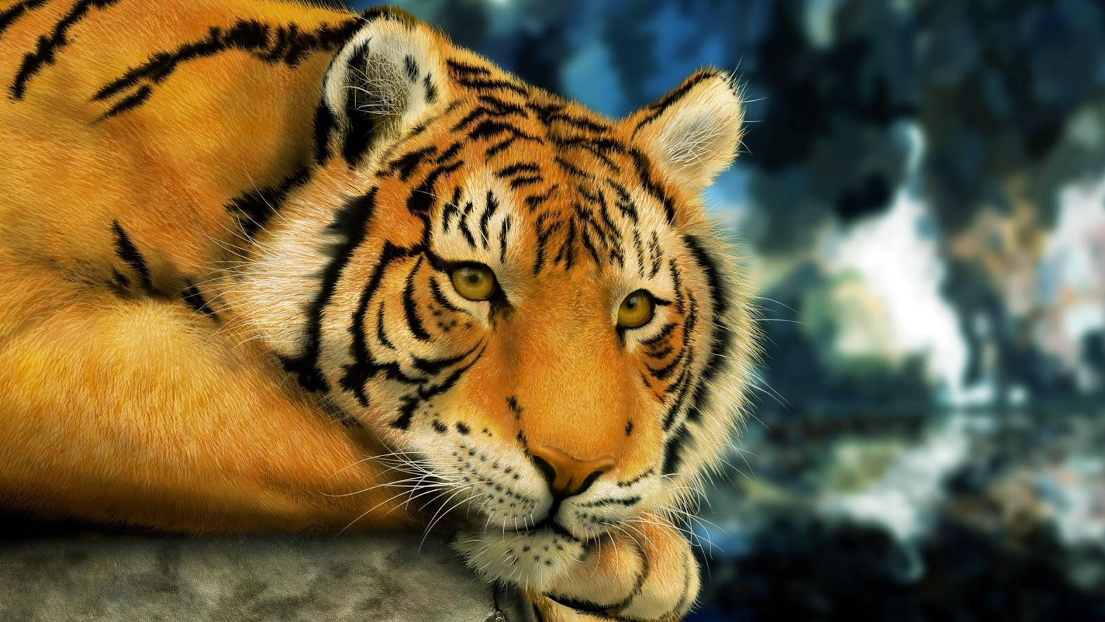 10 amazing animals tiger hd wallpapers full hd | animal of wallpaper