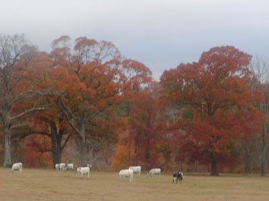 The Rich Colors of late Fall 2011 in these Pineywoods . . .