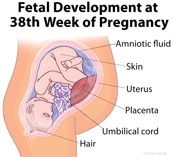 gravid uke 8 Volda
