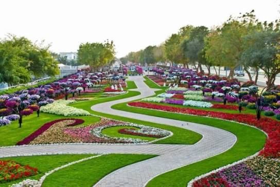 Al-Ain Paradise garden park flower