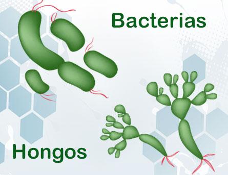 La aplicación del vinagre para el tratamiento del hongo de los pie