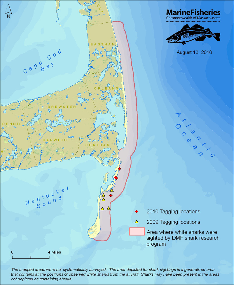 Jaws Returns Great Whites In New England Atlantic Waters