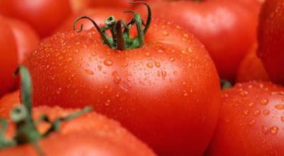 tomato suntik gmo
