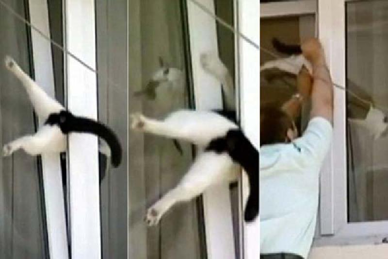 El blog de vania gatos ventanas ca das y mosquiteras - Mosquiteras para puertas leroy merlin ...