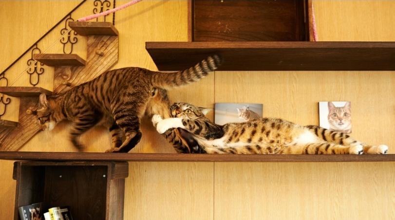 Коты и в любви и в радости