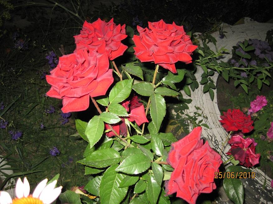 Названия роз