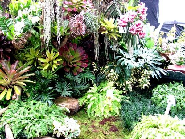 Agri Trade Fair, Kadayawan Festival 2014, Davao City, SM City Davao, Indak-Indak sa Kadalanan, Landscape, Lawn, Plants, Davao delights, Floriculture, Horticulture