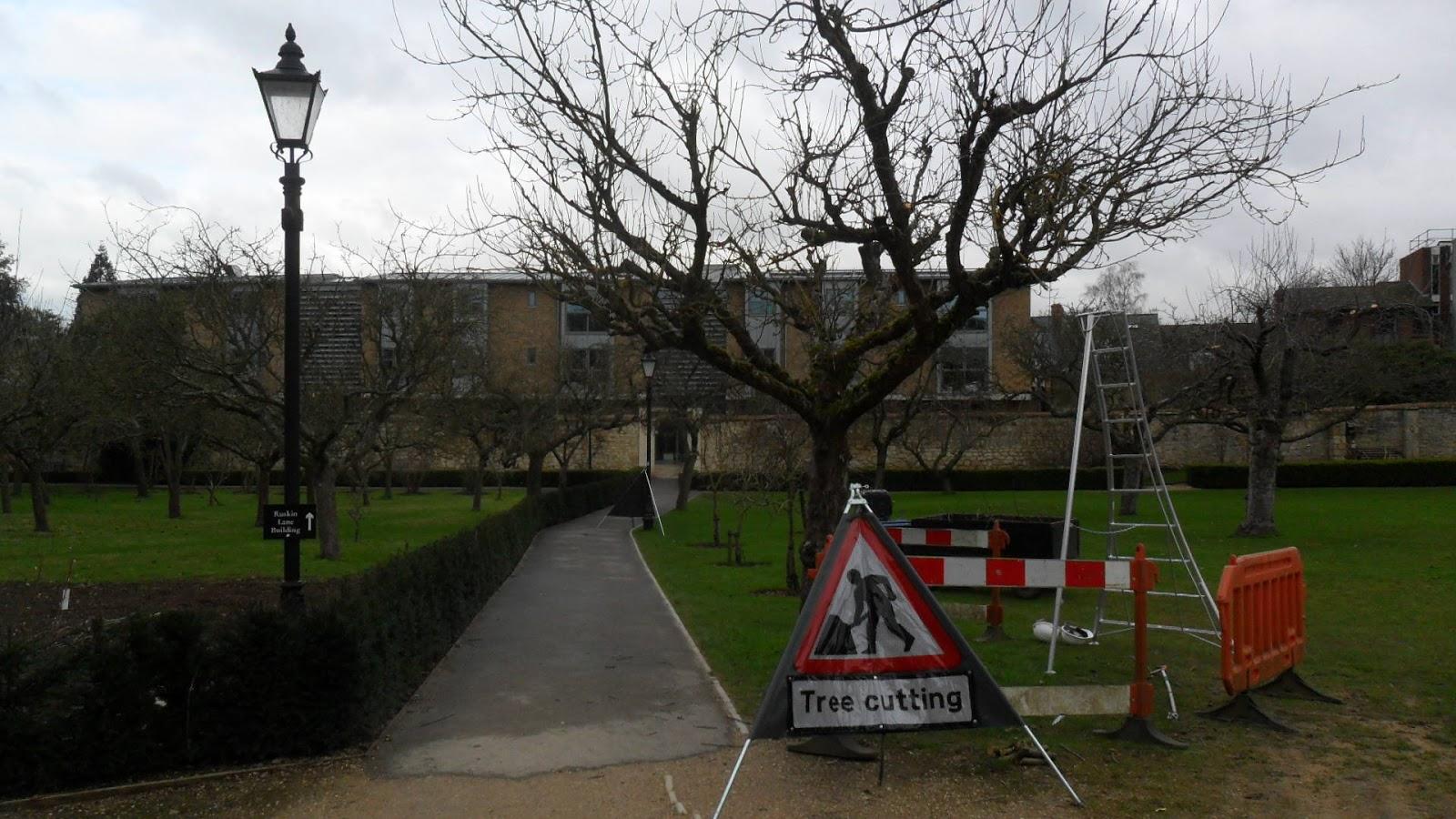 Worcester College Gardeners 39 Tree Cutting 39