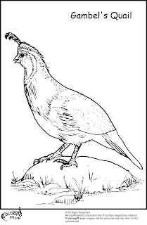 gambel quail coloring pages