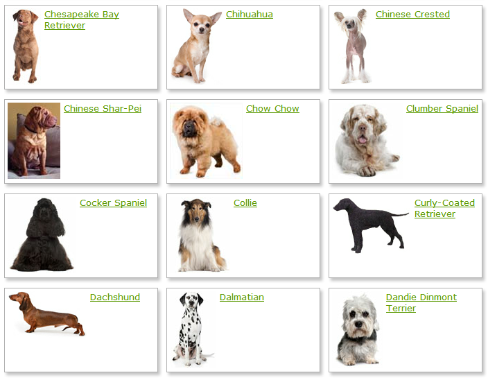 Information on different dog breeds