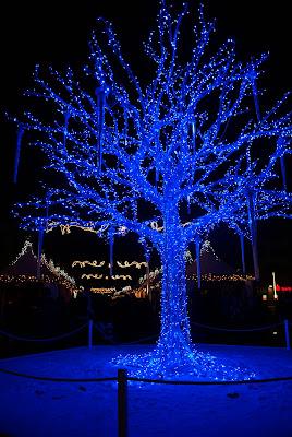 icy blue light tree