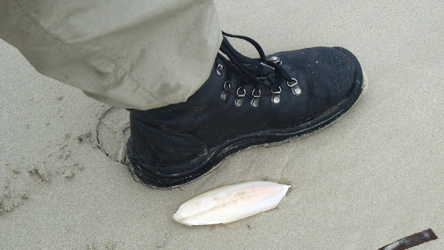 small cuttlefish next to boot
