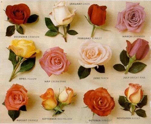 Tumblr Pics Roses Roses Tumblr Pictures