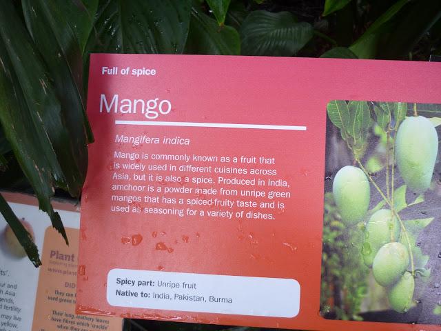 Mango Information Card at Kew Gardens | Petite Silver Vixen