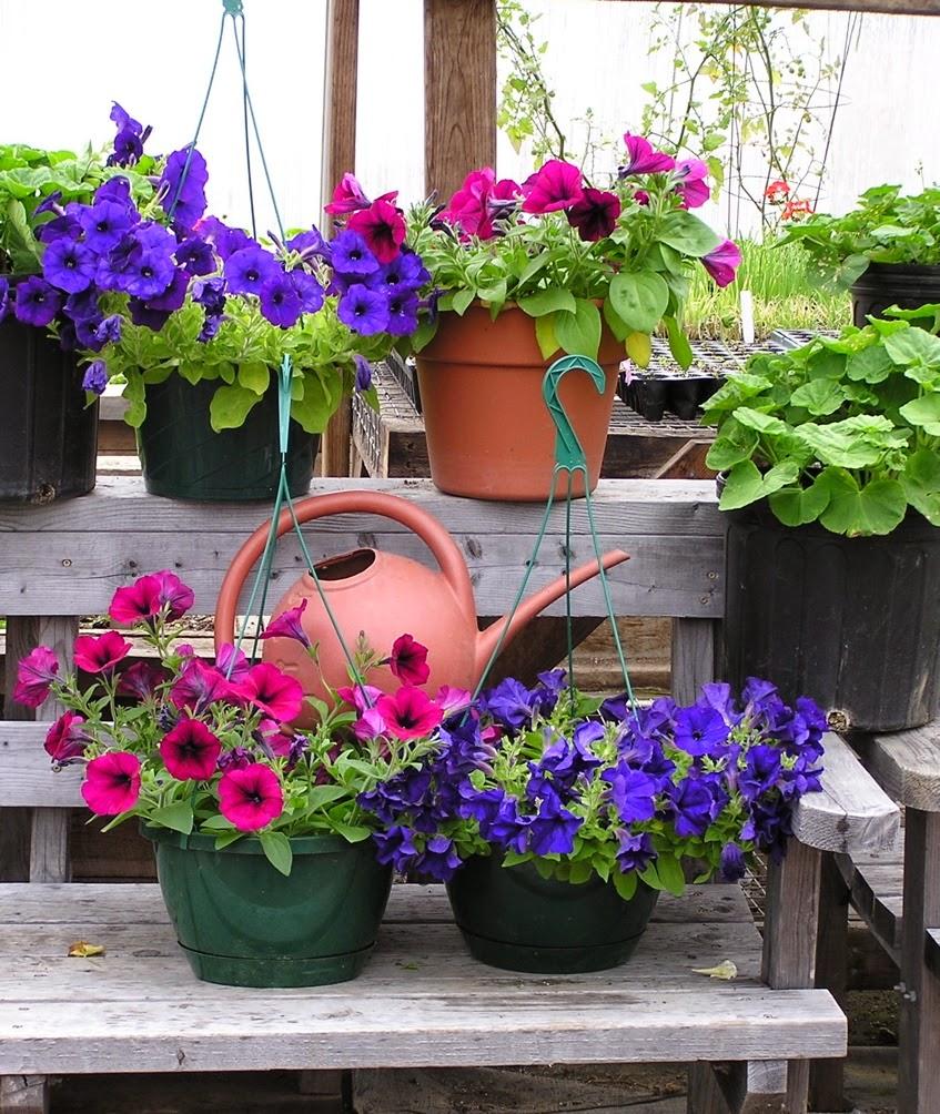 Flores no Jardim o Ano Todo  Forrações  AprendaCultivarcombr
