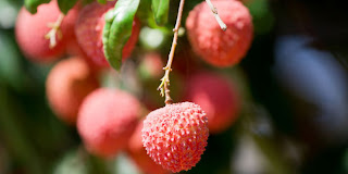 Eat Lychee To Fight Breast Cancer