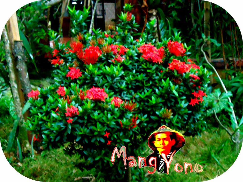 Indahnya Taman Dengan Bunga Asoka