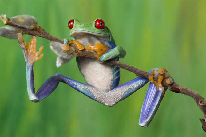 Curiosidades del Mundo: Increíbles fotos de ranas y sapos de colores.