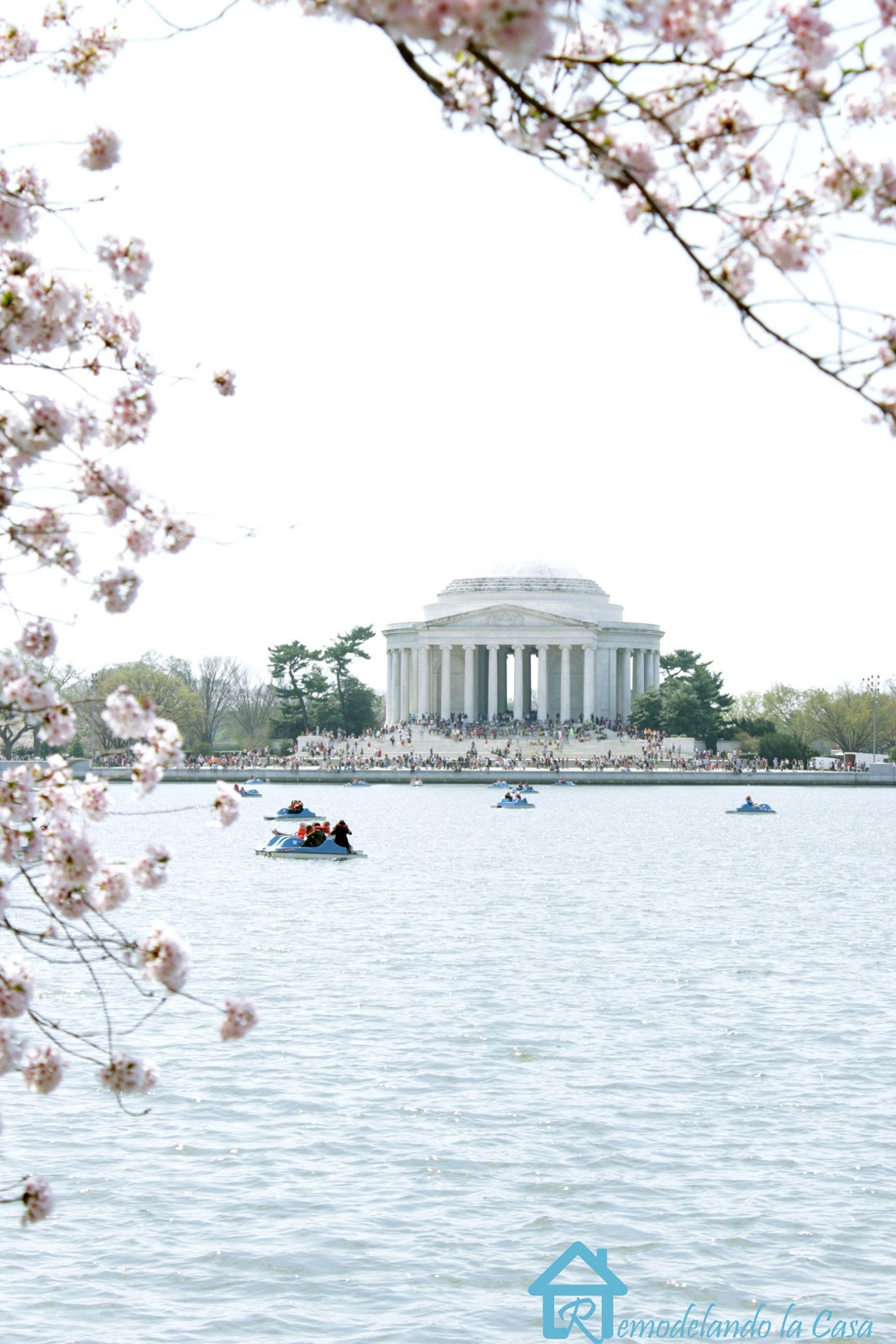 Jefferson memorial during cherry blossom festival in Washington DC