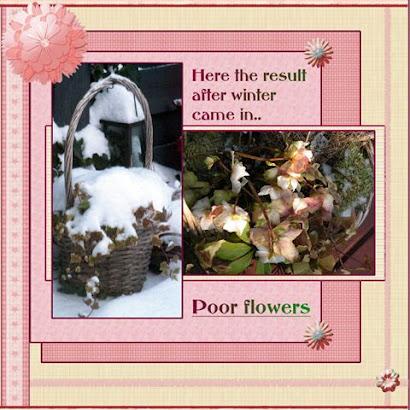 Poor flowers