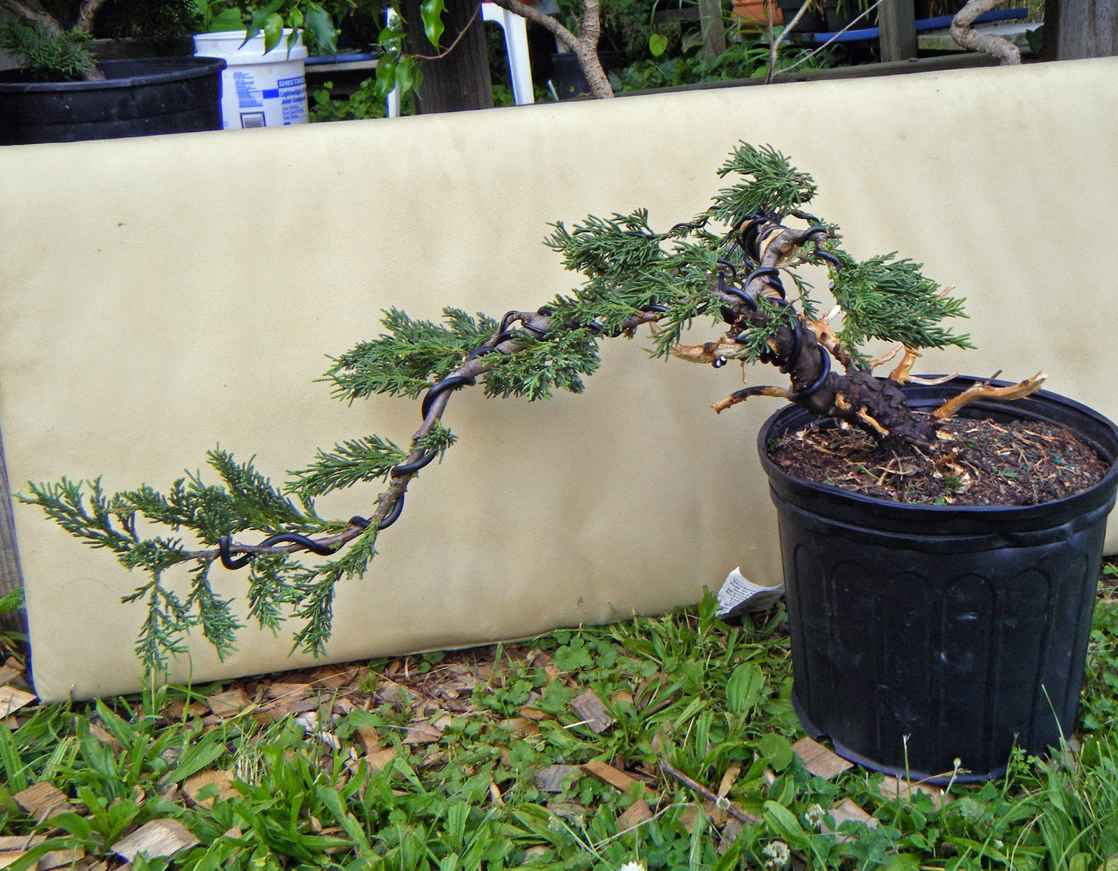 Bonsai In Hoosierland June 2014