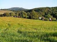 Avançant per la Serra del Ginebrer entre camps verds i boscos de pins