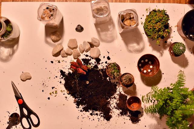 ökosystem einmachglas