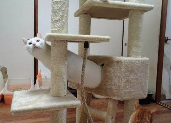 Funny cats - part 91 (40 pics + 10 gifs), cat playing at cat tree
